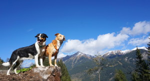 Holidays with dog in Austria