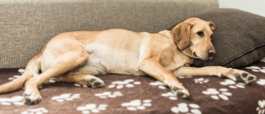 Hundewellness in der Residenz Gruber in Gastein