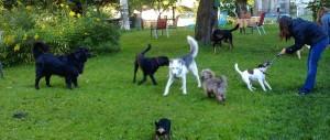 Spielstunde für Hunde in der Residenz Gruber