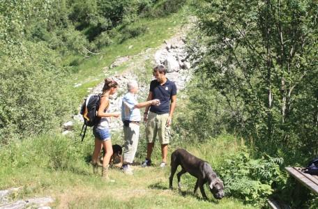 Gasteiner Hundewanderwoche Wandern mit Hund Rudelwandern