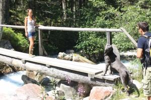 wandern mit dem Hund in gastein Urlaub