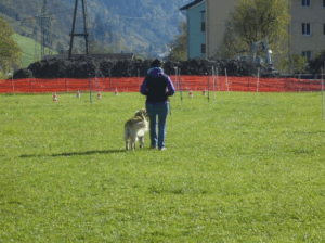 Hundetraining im Urlaub Gastein