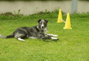 Hundekurse im Urlaub
