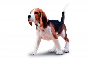 Gutschein für Tractive GPS für Hunde hier abholen