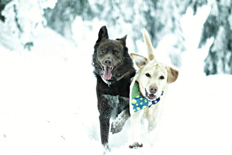 roms und lou im schnee