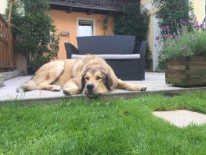 Hundeurlaub-vom-feinsten-Residenz-Gruber