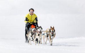 Hundeschlitten in Sportgastein