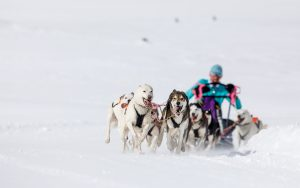 Hundeschlitten sportgastein
