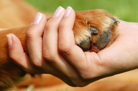 hundewelten Seminar in Gastein