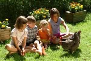 Hühner füttern in der Residenz Gruber Böckstein