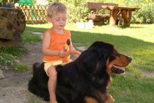 Familienurlaub mit Hund in der Residenz Gruber Böckstein