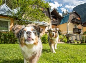 Urlaub mit Hund; Hundeurlaub